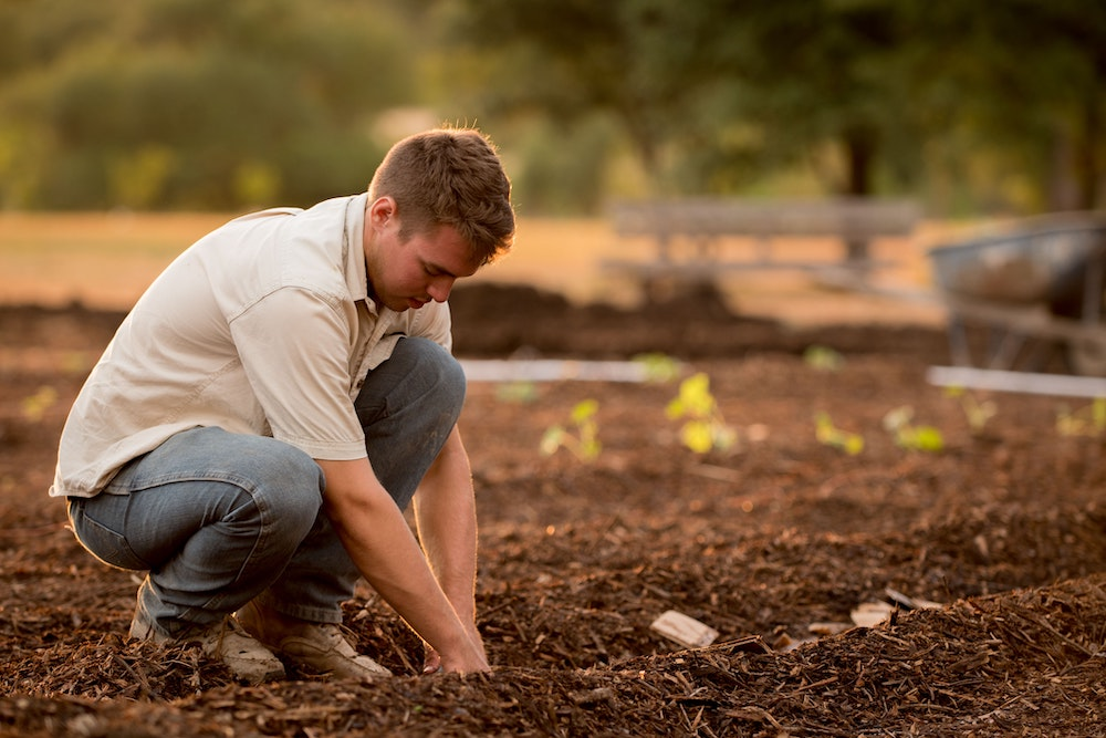 Person works on a row of a garden