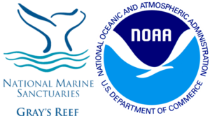 grays-reef-noaa-clear